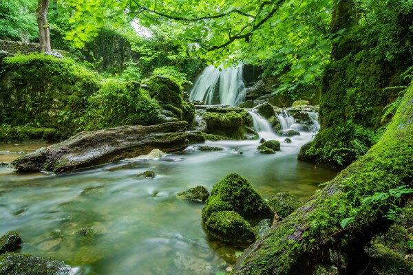 苔 川 渓流 フォレスト 森 森林 自然 滝 の壁紙輸入 カスタム壁紙 PHOTOWALL / Waterfall Stream (e310641)貼ってはがせるフリース壁紙(不織布)【海外取り寄せのため1カ月程度でお届け】【代引き不可】