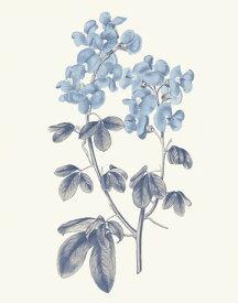 ボタニカルアート ビンテージ アンティーク 花 青の壁紙 輸入 カスタム壁紙 PHOTOWALL / Blue Botanical III (e311198) 貼ってはがせるフリース壁紙(不織布) 【海外取り寄せのため1カ月程度でお届け】 【代引き不可】
