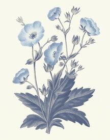 ボタニカルアート ビンテージ アンティーク 花 青の壁紙 輸入 カスタム壁紙 PHOTOWALL / Blue Botanical VI (e311199) 貼ってはがせるフリース壁紙(不織布) 【海外取り寄せのため1カ月程度でお届け】 【代引き不可】
