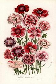 なでしこ 花 赤 レッド ピンク 博物画 ボタニカル アンティークの壁紙 輸入 カスタム壁紙 PHOTOWALL / China Pink Flower (e317034) 貼ってはがせるフリース壁紙(不織布) 【海外取り寄せのため1カ月程度でお届け】 【代引き不可】 壁紙屋本舗