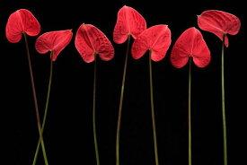 ボタニカル 葉 赤 レッドの壁紙 輸入 カスタム壁紙 PHOTOWALL / Botanical Hearts (e317771) 貼ってはがせるフリース壁紙(不織布) 【海外取り寄せのため1カ月程度でお届け】 【代引き不可】 壁紙屋本舗