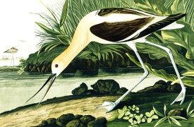 鳥 水鳥 博物画 ビンテージの壁紙 輸入 カスタム壁紙 PHOTOWALL / Barn Swallow - John James Audubon (e318912) 貼ってはがせるフリース壁紙(不織布) 【海外取り寄せのため1カ月程度でお届け】 【代引き不可】