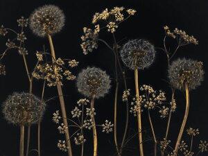 花 黒 ブラックの壁紙 輸入 カスタム壁紙 PHOTOWALL / Meadow Flowers - Black (e320998) 貼ってはがせるフリース壁紙(不織布) 【海外取り寄せのため1カ月程度でお届け】 【代引き・後払い不可】