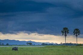 象 ゾウ 動物 空 雲の壁紙 輸入 カスタム壁紙 PHOTOWALL / Wanderer (e321785) 貼ってはがせるフリース壁紙(不織布) 【海外取り寄せのため1カ月程度でお届け】 【代引き不可】