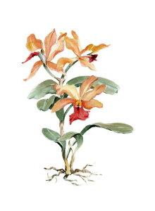 花 オーキッド ラン オレンジ ボタニカルアートの壁紙 輸入 カスタム壁紙 PHOTOWALL / Orange Orchid (e320223) 貼ってはがせるフリース壁紙(不織布) 【海外取り寄せのため1カ月程度でお届け】 【代引