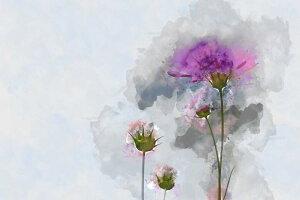 コスモス 花 水彩画の壁紙 輸入 カスタム壁紙 PHOTOWALL / Painting of Cosmos Flower (e325064) 貼ってはがせるフリース壁紙(不織布) 【海外取り寄せのため1カ月程度でお届け】 【代引き・後払い不可】