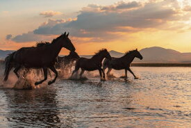馬 ウマ 動物 水辺 走る 空 雲 ピンクの壁紙 輸入 カスタム壁紙 PHOTOWALL / Water Horses (e327077) 貼ってはがせるフリース壁紙(不織布) 【海外取り寄せのため1カ月程度でお届け】 【代引き不可】