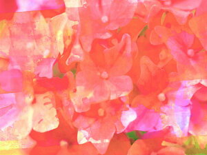 花 ピンク 赤 レッドの壁紙 輸入 カスタム壁紙 PHOTOWALL / Joyful Summer I (e327184) 貼ってはがせるフリース壁紙(不織布) 【海外取り寄せのため1カ月程度でお届け】 【代引き・後払い不可】