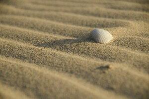 砂浜 砂 貝 シェルの壁紙 輸入 カスタム壁紙 PHOTOWALL / Sand and Shell (e331479) 貼ってはがせるフリース壁紙(不織布) 【海外取寄せ商品】 【代引き・後払い不可】