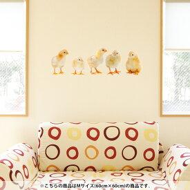 ウォールステッカー 飾り 60×60cm シール式 装飾 おしゃれ 壁紙 はがせる 剥がせる カッティングシート wall sticker 雑貨 ガラス 窓 DIY プチリフォーム パーティー イベント 賃貸 002715 アニマル 鳥 動物 写真