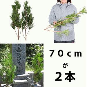 高野槇のお試しセット5セット生花切花お彼岸