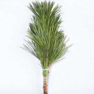 【定期購入可能】高野槙 くくり 束 50cm 1束 生花