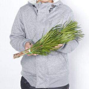 高野槇(こうやまき・コウヤマキ)のお供え用束50cm