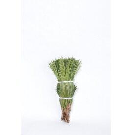 【生花】【定期購入可】 高野槙 切枝 40cm 20本組み 1束 切花