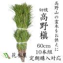 【定期購入可能】高野槙 切枝 60cm 10本組 1束 生花 切花
