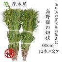 高野槙 切枝 60cm 10本組×2ヶ 生花 切花