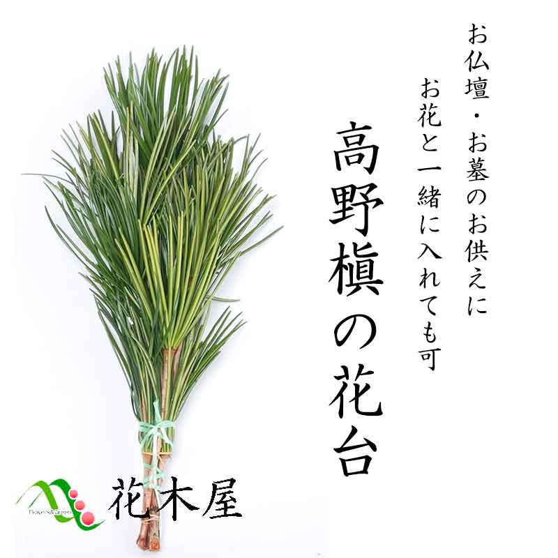 【定期購入可能】高野槇 仏花の花台 40cm 1束 生花 切花