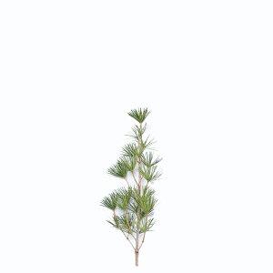 高野槇の芯80cm