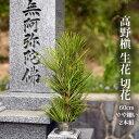 高野槙 の 切枝 60cmm M品×2 生花 切花 やや細