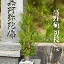高野の歴史が感じられる一品 高野槙 切枝 70cm 1本 生花 切花
