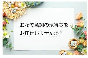 【父の日早割クーポン】紫陽花アジサイ花マジカル5号鉢父の日ブル—ピンクグラデーション鉢花鉢花ギフト