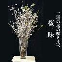 【期間限定】桜三昧 三種の桜の咲き比べセット 啓翁桜 彼岸桜 ボタン桜 生花 115cm