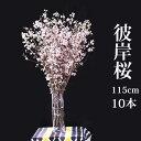 彼岸桜 ひがんさくら 生花 1.15m 10本相当 お花見 花見 家 屋内 飾り ボリュームあり 贈り物 豪華