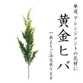 黄金ヒバ 100cm 程度 1本 から 生花 切花 切り花 花材 花展 展示会 切り花 枝物 枝もの 秋 木の枝 インテリア