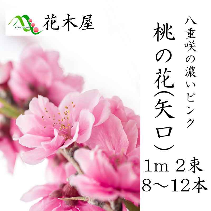 【2月1日ごろより発送開始】桃の花 ひな祭り 花 生花 矢口桃1m・2把