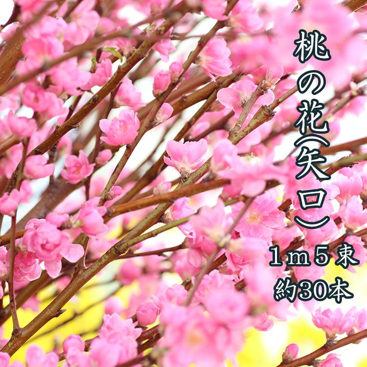 ひなまつり 桃の花 花桃 1m 5把 約30本 ひな祭り 雛祭り 生け花 飾り 花 花材 旧節句