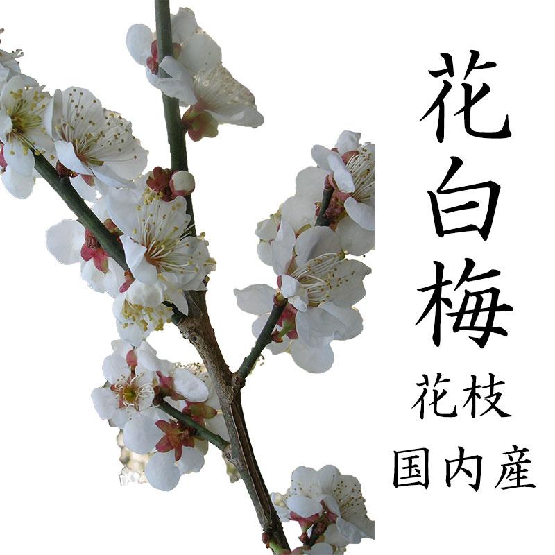 【12月5日頃からの発送です】梅の花 一把 5本程度 120センチ前後 木の枝 インテリア