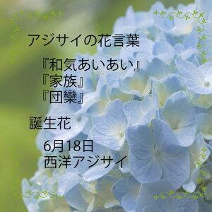 【人気のブルー緊急入荷!限定15個父の日間に合います】紫陽花アジサイあじさいマジカルレボリューション5号鉢ピンクブル—秋色アジサイ鉢花花鉢ギフト