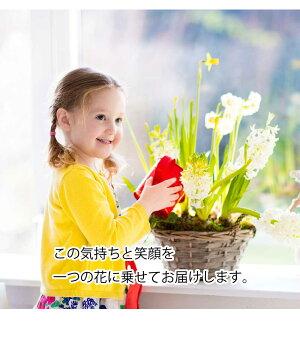 ほおずき鬼灯鉢植え5号鉢オレンジ鉢花花鉢ギフト魔除け縁起物
