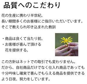 【12月5日より発送】梅の花一把5本程度120センチ前後生花
