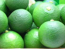 かぼす カボス [かぼす青果 2kg 有機栽培品](有機JAS規格認定農産物)【カボス果実】【カボス青果】約25個