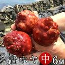 ホヤ 活ほや 雄勝湾産[中]6個活海鞘 活ホヤ三陸宮城県産 漁師直送 バーベキュー BBQ