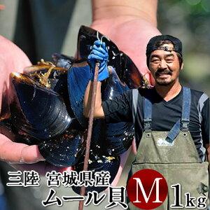 生ムール貝 中 1kg三陸宮城県産 漁師直送 活ムール貝(イガイ ムラサキ貝 カラス貝)