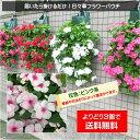 3個で送料無料!【植え込んでお届け】日々草フラワーパウチ!花色:ピンク系