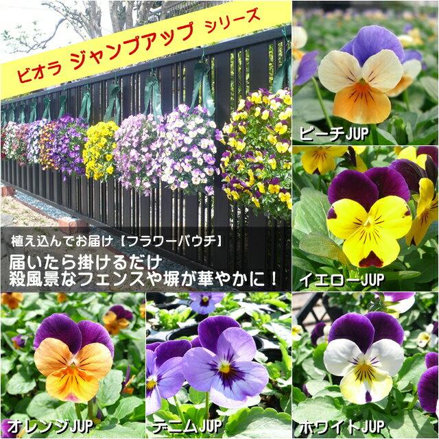 【ビオラフラワーパウチ】ジャンプアップシリーズ