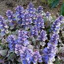 斑入り葉が日陰の庭のアクセントに
