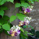 ユニークな花