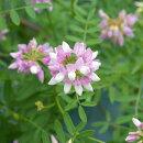 純白の花を株いっぱいに咲かせる卯の花