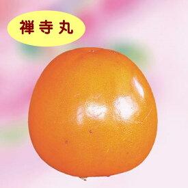 【カキノキ属】(甘柿)禅寺丸(接木苗)4号LLポット