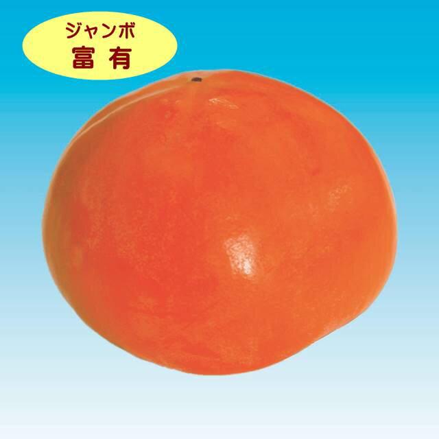 【カキノキ属】ジャンボ富有柿(二年生接木苗)4号LLポット