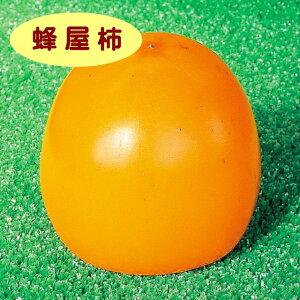 【カキノキ属】(渋柿)蜂屋柿(接木苗)4号LLポット