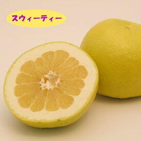 【ミカン属】スウィーティー (二年生接木苗)4号LLポット