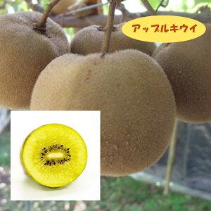 【アクチニディア属】キウイ(メス木)アップルキウイ(接木)4号LLポット