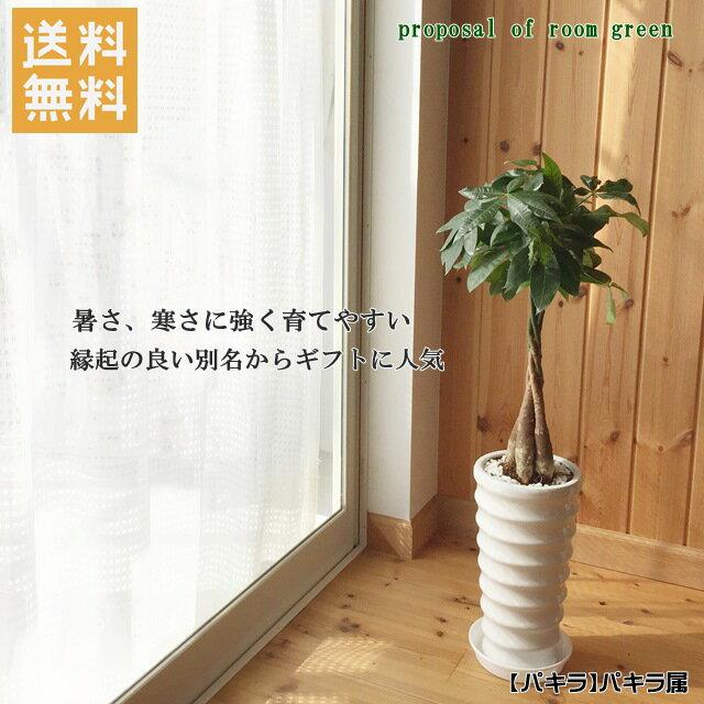 送料無料!観葉植物【パキラ属】パキラ丸陶器6号鉢