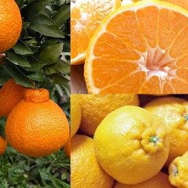 【ハイブリット系柑橘ミカン属】デコポン(接木苗)4号LLポット