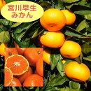 果実イメージ